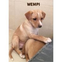Wempi
