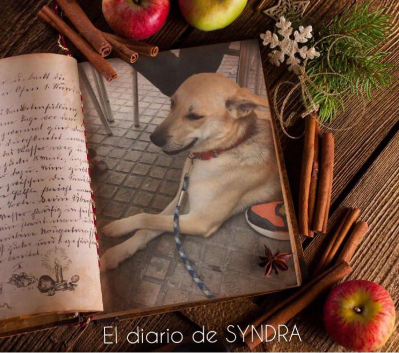 GITANA, ahora Syndra es capa de Vogue jajajaja