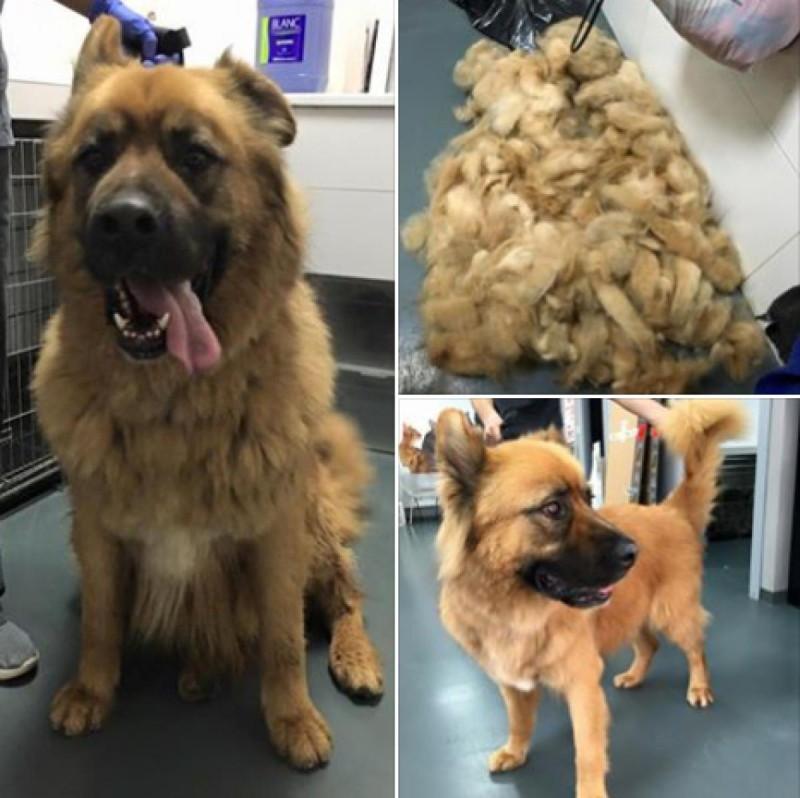 OSO antes y después de la pelu